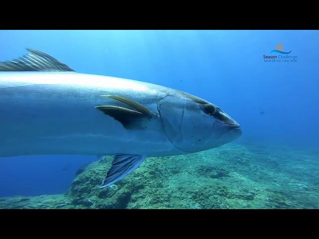 Trip Offshore Dives Formigas _ Dollabarat 18/07/2019