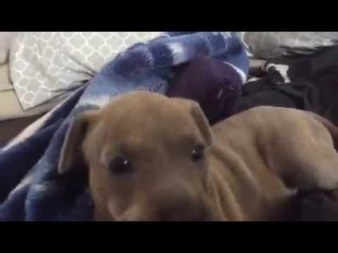 Best Cry Ever: Puppy Edition.