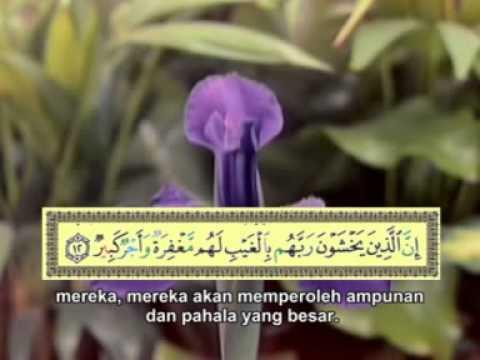 Surat Al Mulk - Muh Thaha Al Junaid