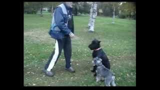 Обучение собаки базовым навыкам послушания