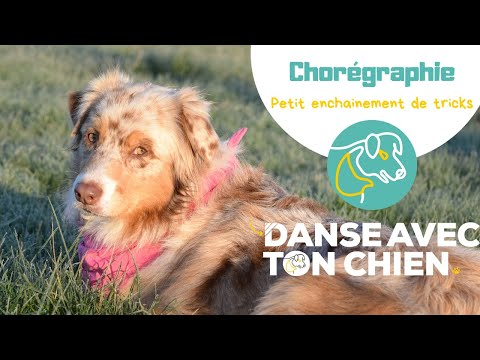 Enchainement de Noel - Dog dancing