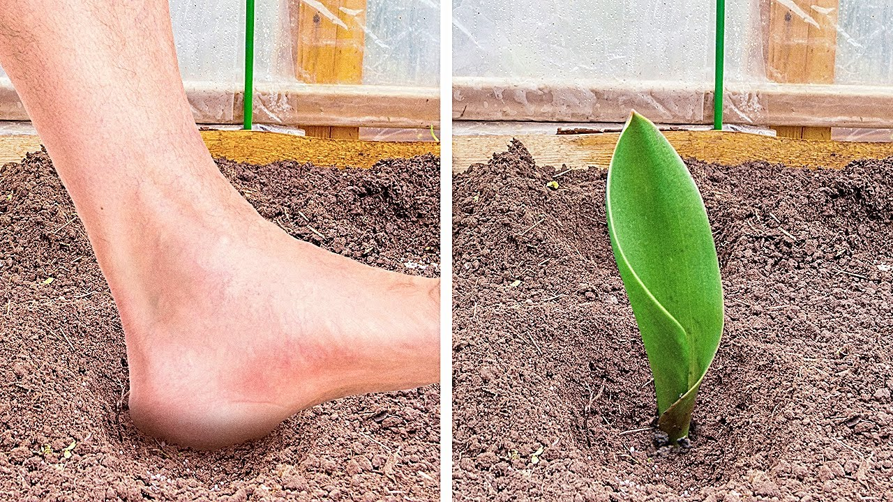 Download 28 SIMPLE PLANT GROWING ideas to make your harvest bigger and flowers blossom