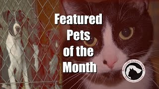 Romeoville Humane Society Pet of the Month October 2015