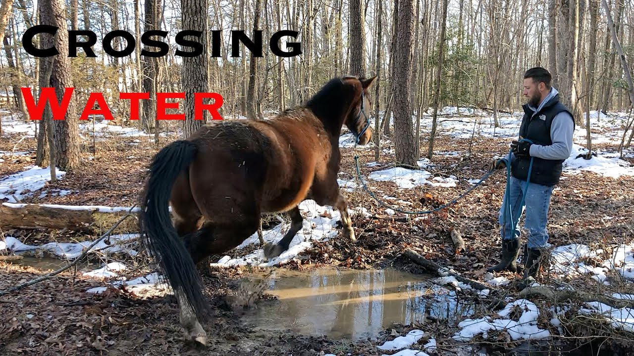 How to Teach your Horse to Cross Water
