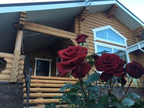 Дома из оцилиндрованного бревна Проекты, строительство