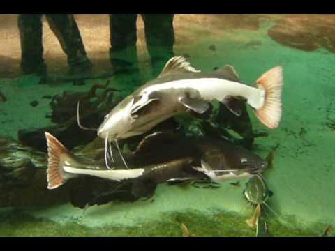 Kurztrip aquarium zoo duisburg und zierfische aquarium for Zierfische aquarium