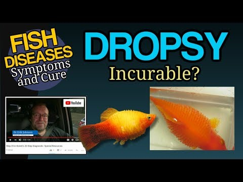 Dropsy, Big Belly, Ascites In Goldfish, Koi And Tropical Fish Treatment