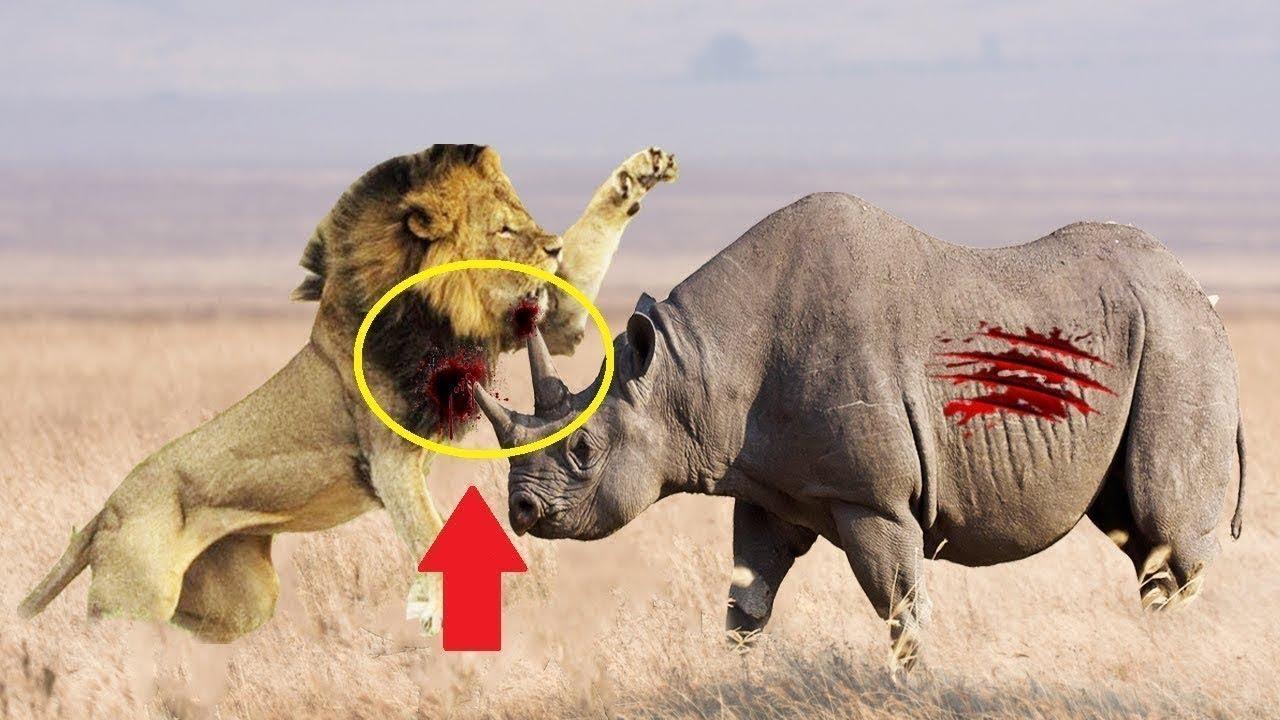 RINOCERUL In Actiune! Lupte INCREDIBILE Intre Rinocer Elefant si alte Animale Salbatice!