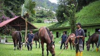 En pleine jungle sauvage de Cameron Highlands : la Spelling Station pour chevaux