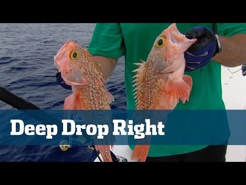Deep Drop Tutorial Including Rigs, Prime Baits And Best Tackle - Florida Sport Fishing TV
