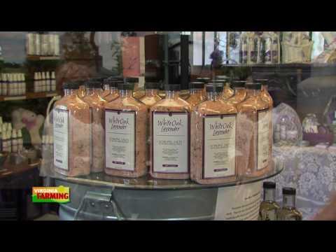 Virginia Farming: White Oak Lavender Farm