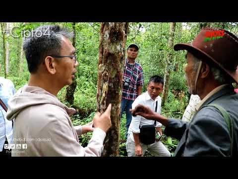 Unik, Sihar Sitorus Bertemu Dengan Petani Parlente di Tengah Hutan