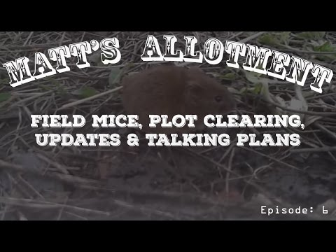 Matt's Allotment Ep.6 - Field Mice, Plot Clearing, Updates & Talking Plans