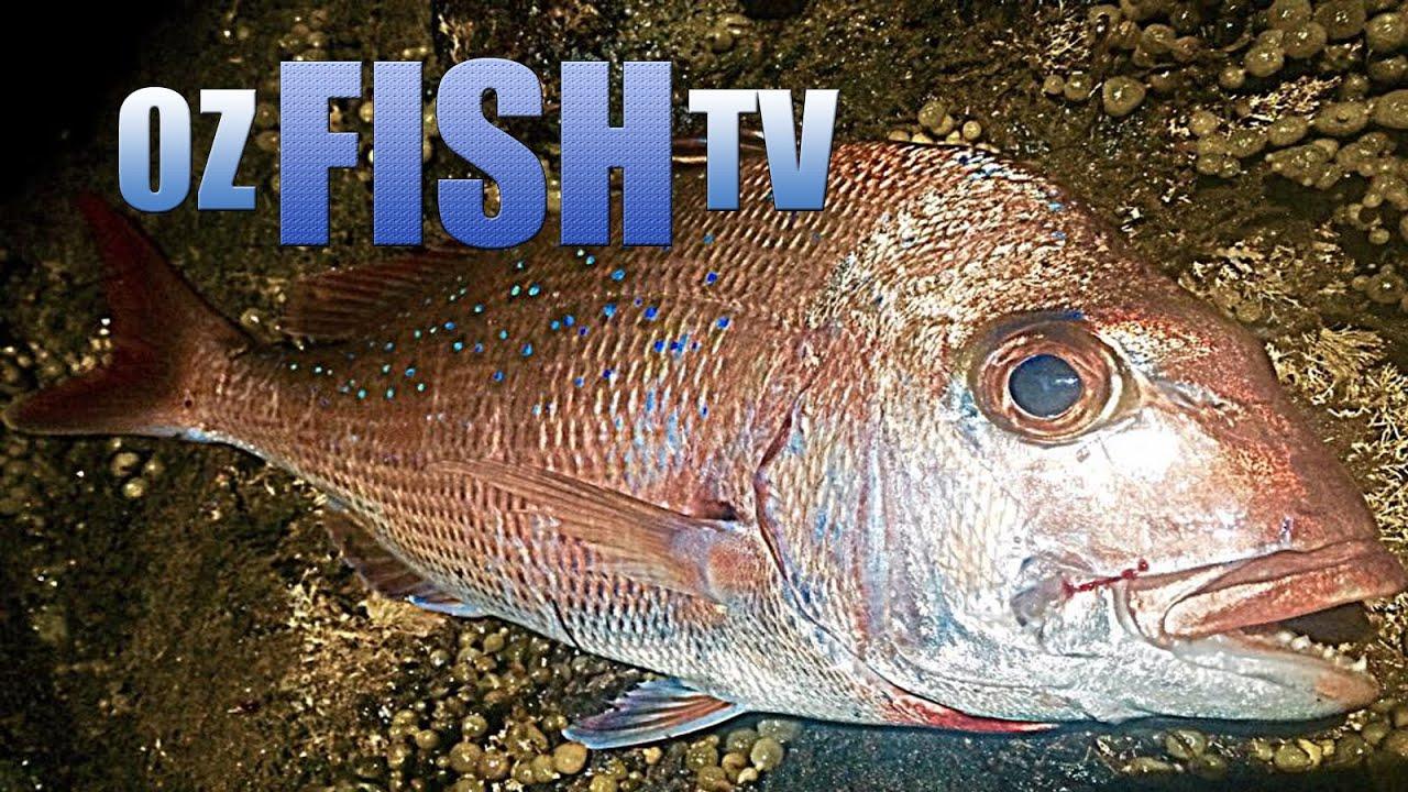 Oz fish tv season 3 episode 8 corinella rock fishing for How to season fish