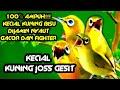 Kecial Kuning Jos Speed Gesit  Mp3 - Mp4 Download