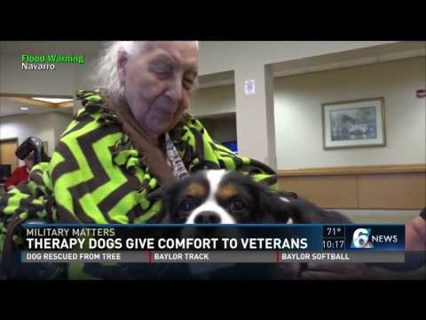 Therapy dogs visit veterans home