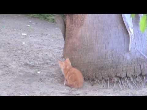 Protective Mama Cat