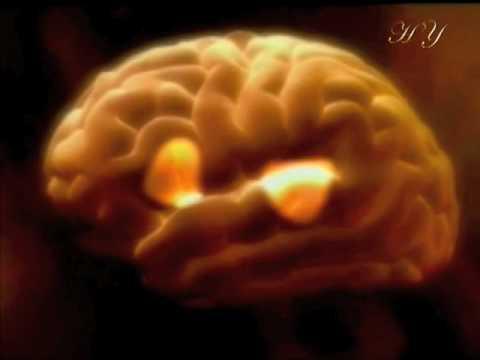 İnsan Beyninin Sınırları
