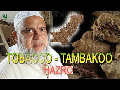 TOBACCO Hub  - TAMBAKO dealer in Hazro, Pakistan