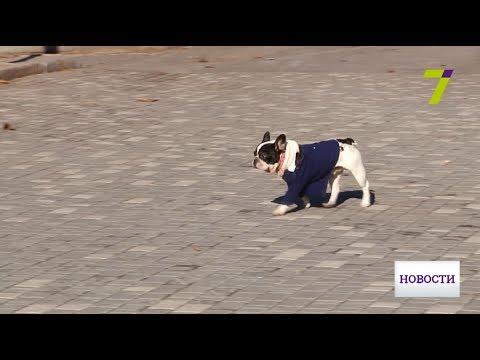 В Одессе появится «Скорая помощь для животных»