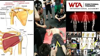 Movimenti Funzionali del Cingolo Scapolare durante gli esercizi fisici