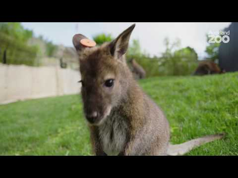 Thumbnail: Join Lizzy in our Wallaby crèche