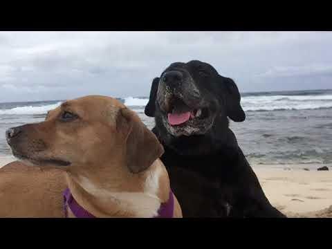 Mana and Pono at Sandy's beach