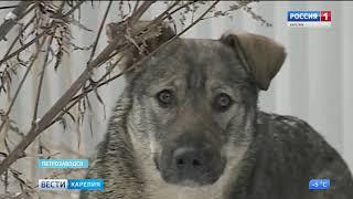 В Петрозаводске нашли места скопления безнадзорных собак