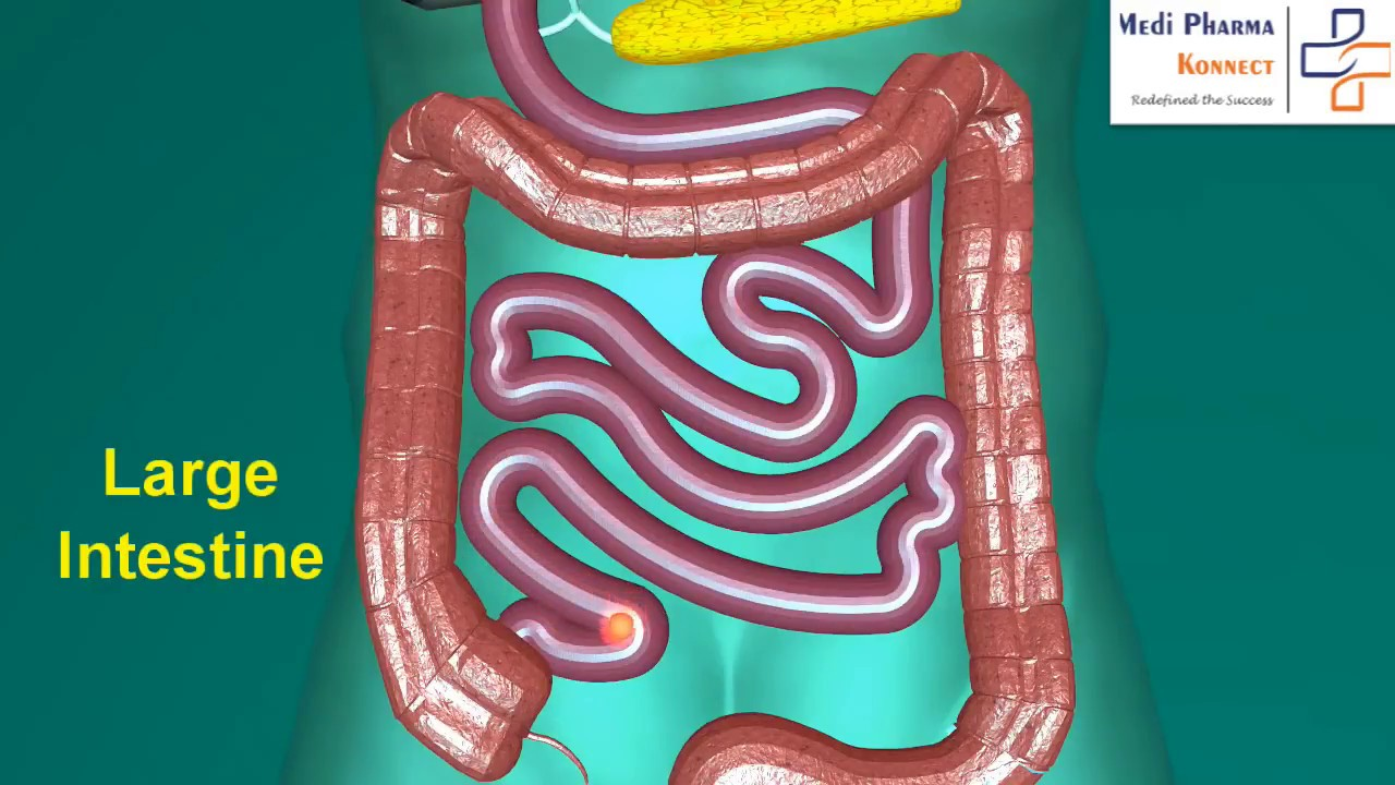 Anatomy and Physiology of Digestive System (HINDI) - YouTube