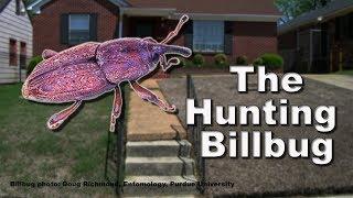 Gambar cover The Hunting Billbug