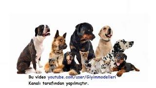 Dünyanın En Akıllı 10 Köpeği
