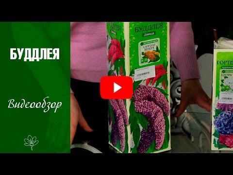 Моя рассада овощей и рассада цветов перед высадкой в открытый грунт. Подвожу итоги.из YouTube · С высокой четкостью · Длительность: 16 мин1 с  · Просмотров: 91 · отправлено: 24.05.2017 · кем отправлено: Купил Дачу