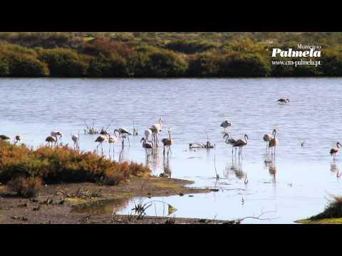 Aves na ribeira da Marateca - Estuario do Sado