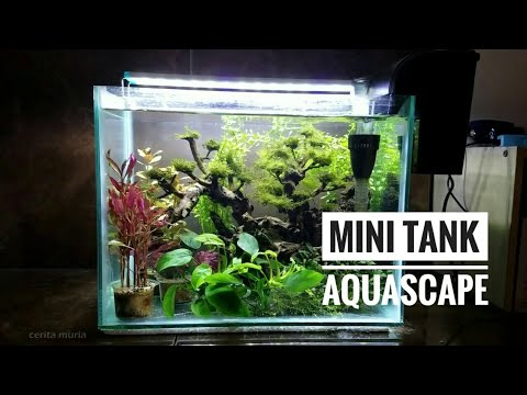 Aquascape Mini Ramai Ikan Kecil Mini Tank Aquascape Youtube