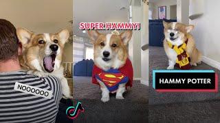 Ultimate Hammy and Olivia New TikTok Videos 2021 | All Hammy & Olivia New Funny TikToks Compilation