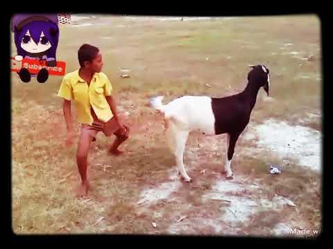 Main Tujh ko Bhaga Laya ( Funny Dance)