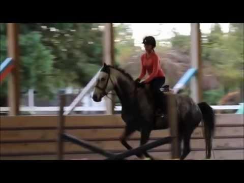 Alisha Newton ft. Horses