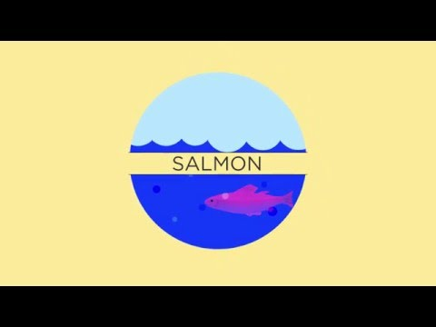 Word Origins - Salmon by Rosetta Stone