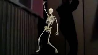 Kostra Tancuje Z Veverkou
