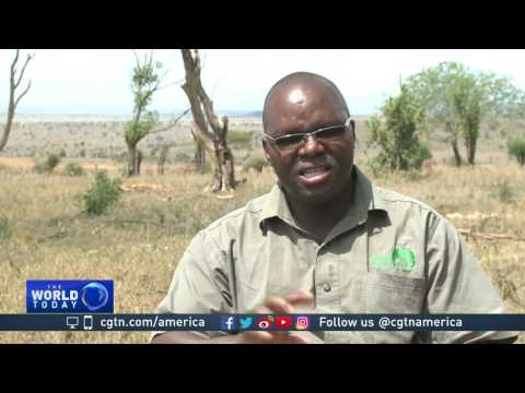 Kenya carries out wildlife census in Tsavo East National Park