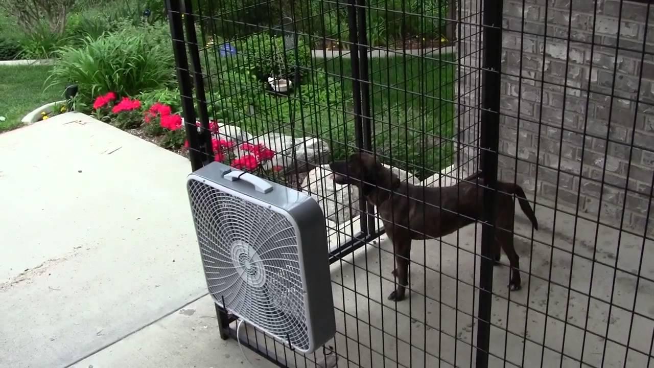 Dog Crate Fans : K kennel store box fan bracket youtube