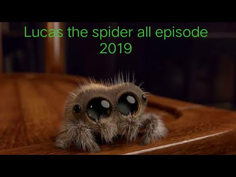 Lucas the spider all episode 2019