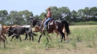 Buckaroo Experiences Travail de Ranch
