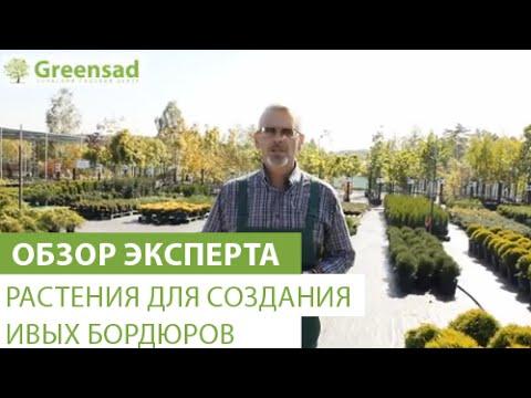 Растения для создания живых бордюров