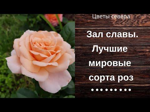 Зал славы. Лучшие мировые сорта роз.