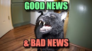 Talking Kitty Cat - Good News & Bad News