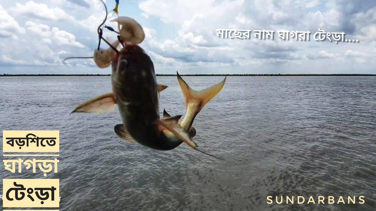 বড় নদীর ঘাগড়া টেংড়া   সুন্দরবন জীবন   সিজন ০৫   পর্ব ২৭   Sundarbans Life   Mohsin ul Hakim