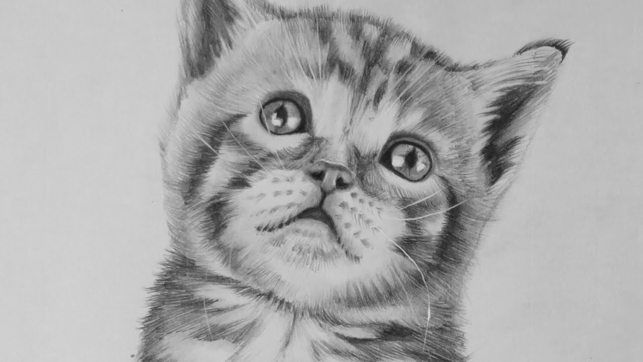drawing a realistic baby kitten cute cat youtube