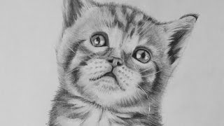 cat realistic drawing easy kitten tigre dessin anime gato realista bebe