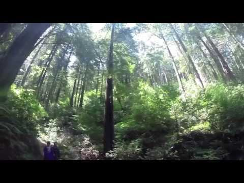 California Redwoods - incredible San Francisco Bay Area day trip